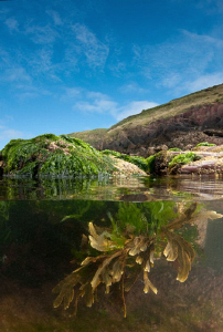Pembrokeshire rock pool by Paul Colley 